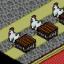 Chicken! Chicken! Chickens!!