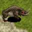 Bested Desert wolf