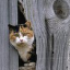 Cat Stuck in the Wall