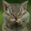 The Catmunk
