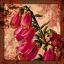 Bloodstained Petals V (Jigitarisu)